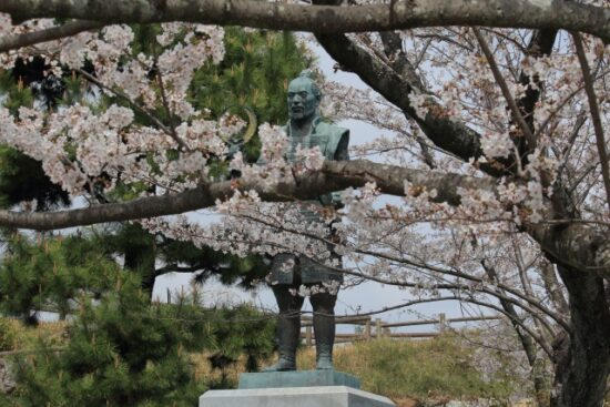 徳川家康と桜